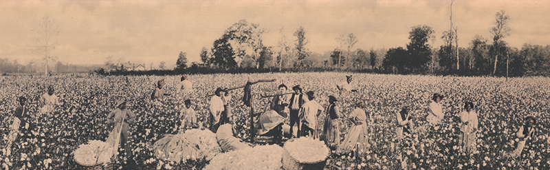 Sharecroppers working in cotton fields near Memphis, 1922, 94.109.1a